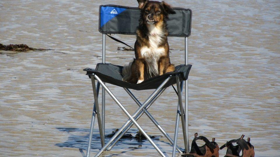 Dog Boarding North Miami Beach Fl