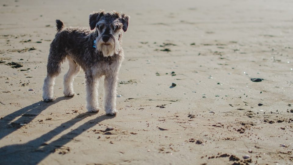 Top 4 Dog Beaches In Carlsbad The Dog People By Rovercom