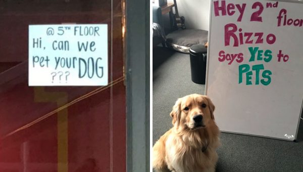 Neighbors Post Sign Asking to Pet Dog; Adorable Response Goes Viral