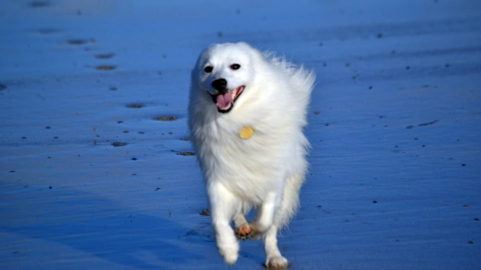 Top 3 Dog Beaches in Pensacola | The Dog People by Rover com