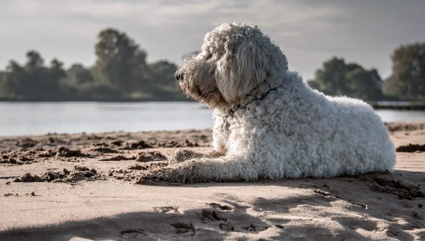 Top Dog Beach in Davis Island