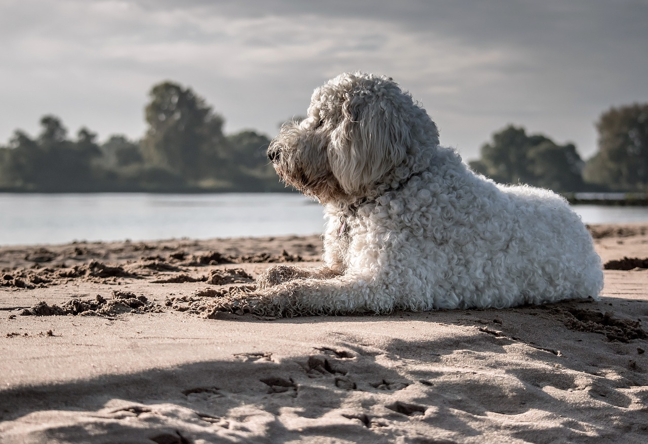 How Much Do Dogs Really Remember? | The Dog People by Rover.com