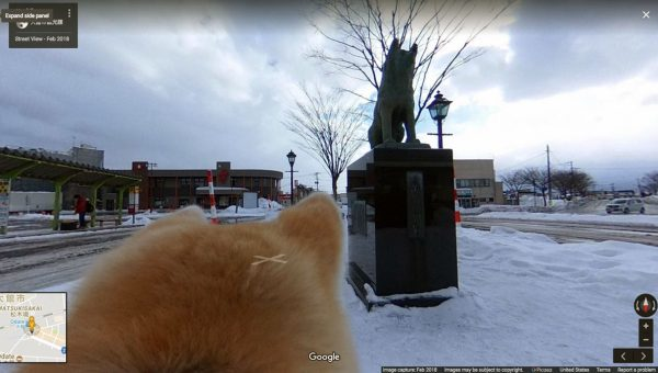 Dogs Can Be Your Virtual Tour Guides Thanks to Google's Floofiest New Feature