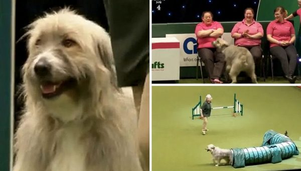 Fun-Loving Rescue Dog Freestyles Agility Competition in Hilarious Video