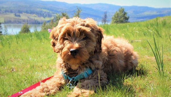The 92 Best Brown Dog Names for 2018