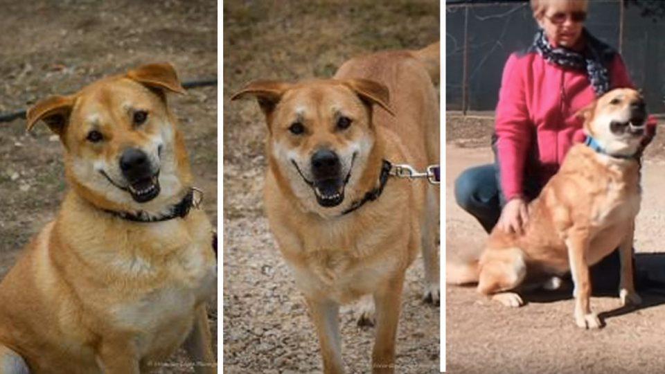 lucas the dog needs a home in bulverde texas HERO