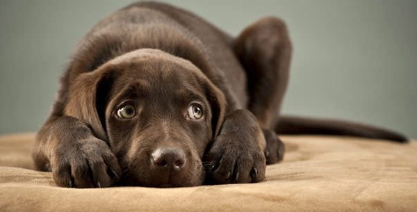 Are Dogs Afraid of the Dark?