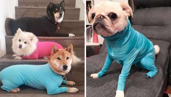This Fabulous Dog Leotard Is Apparently What the World Needs Right Now