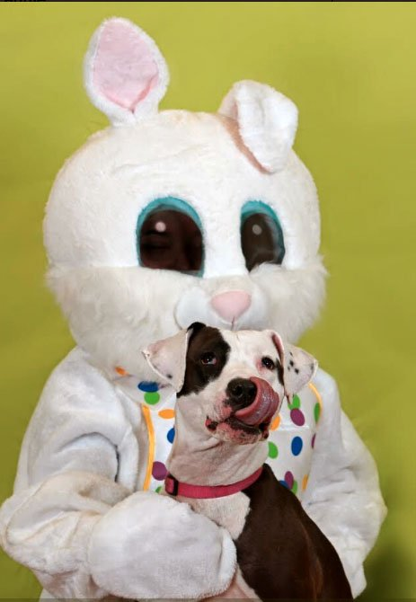 dog on easter bunny's lap