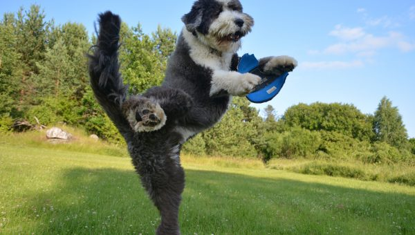 9 Excellent Frisbees to Really Burn off Your Dog's Energy
