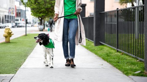 On-Demand Dog Walking with Rover