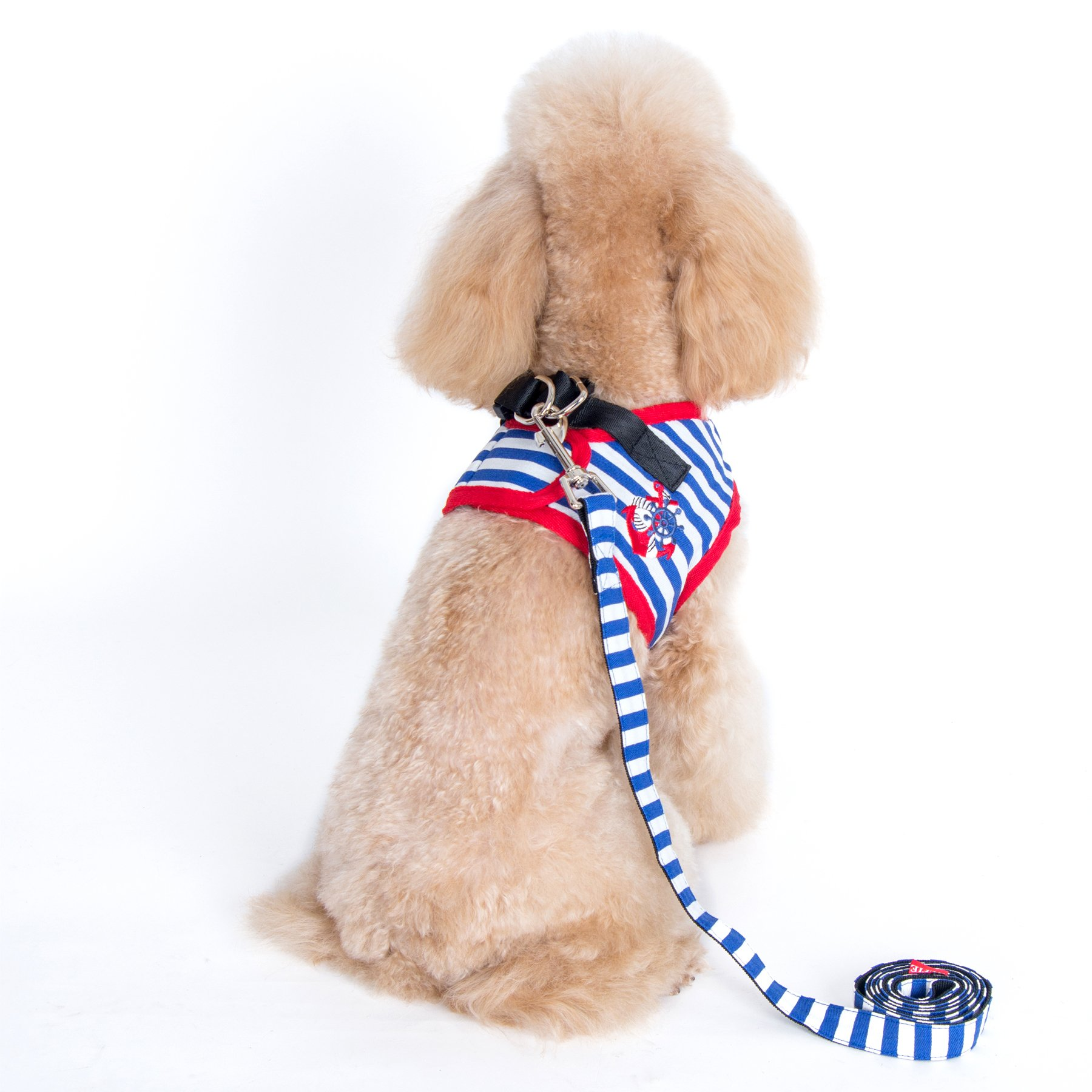 The 7 Best Harnesses for Small Dogs: Your Complete Guide | The Dog