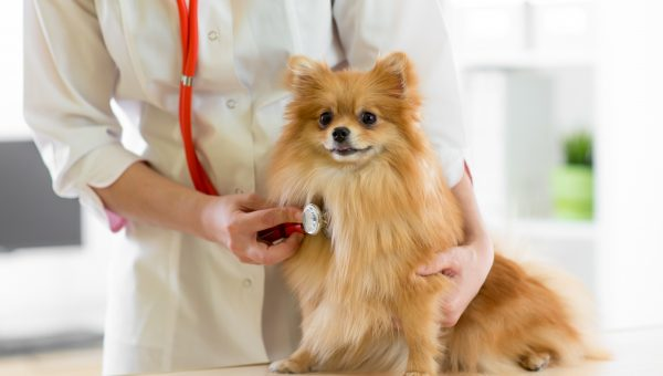 Congestive Heart Failure in Dogs: Symptoms You Don't Want to Miss