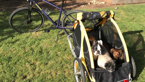 This Primo Dog Bike Trailer Will Keep You Adventuring All Summer Long