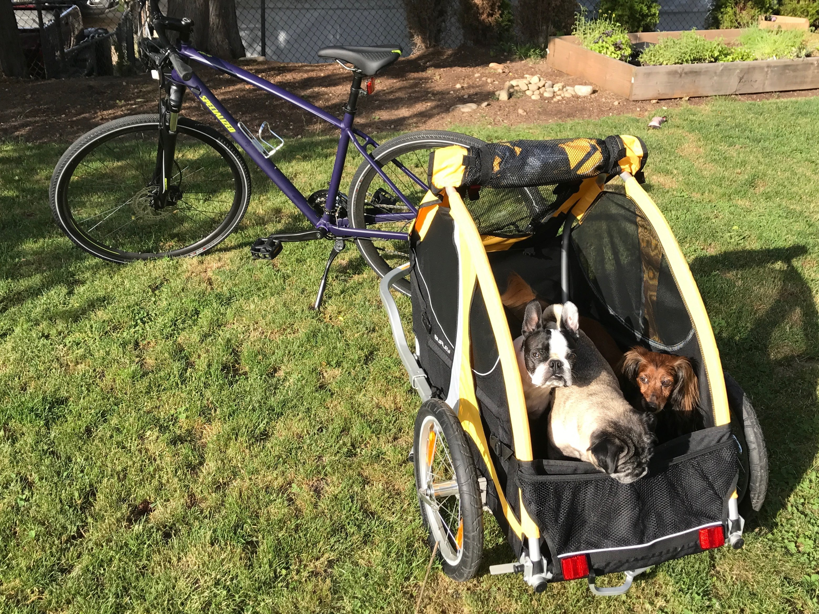 bc95c5a1122 This Primo Dog Bike Trailer Will Keep You Adventuring All Summer Long   The  Dog People by Rover.com