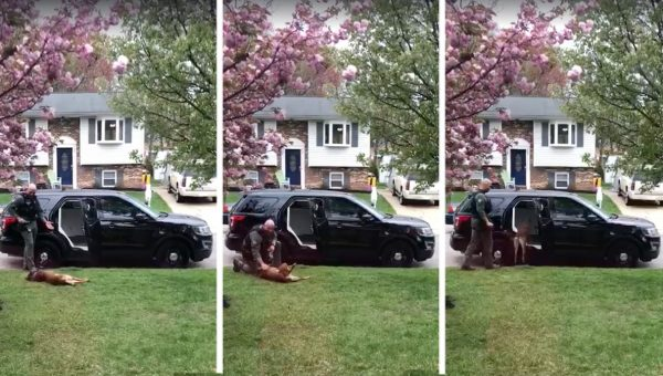 K9 Officer Refuses to Go to Work Until He Gets Belly Rubs [Video]