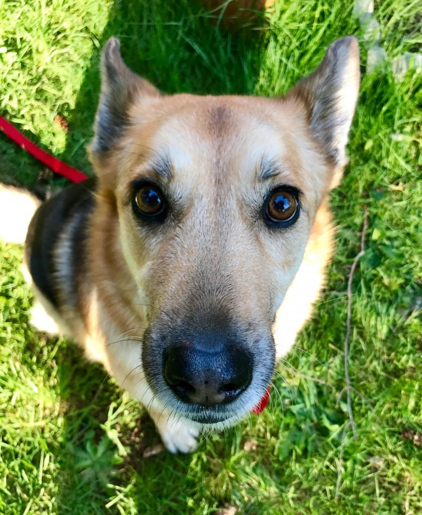 Dog Has Diarrhea On Rug: True Story: My Dog Had Giardia And We Survived (and So Did