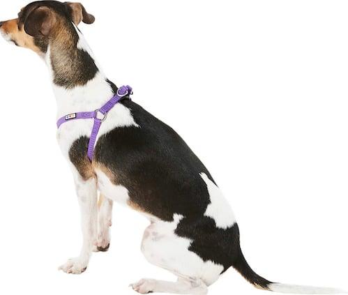 dog in purple Pawtitas harness