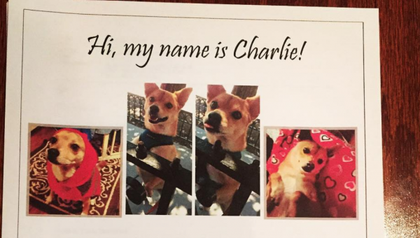 People Are Writing Landlord Letters for Their Dogs. Here's Why (and How!)