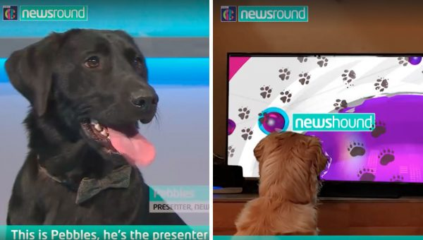 Must-See News for Pets (by Pets!) Was the Best April Fool's Day Prank Ever
