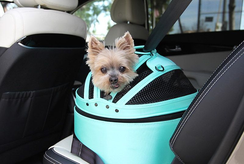 The Best Dog Crates for the Car Could Save Your Dog\'s Life