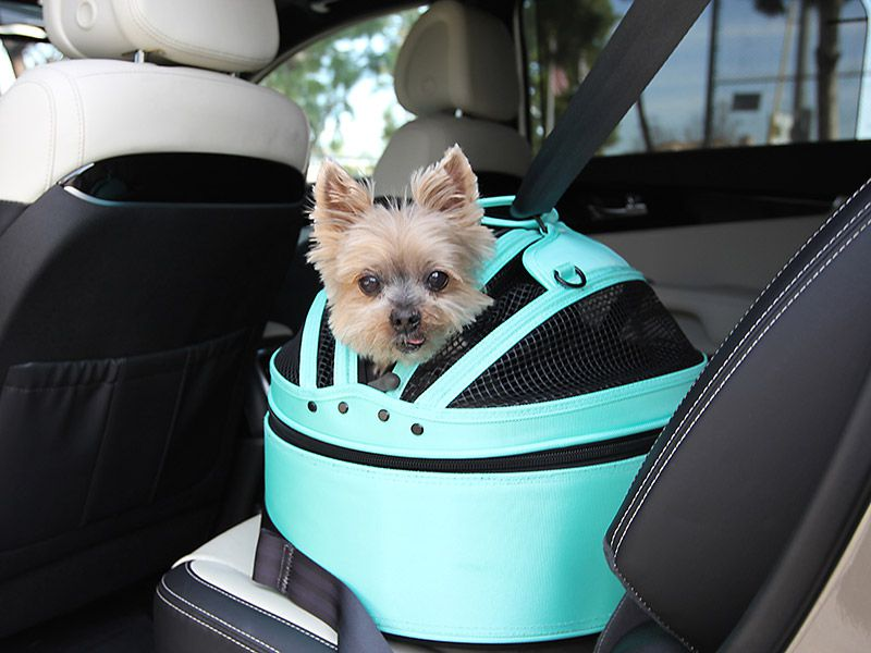 The Best Dog Crates For The Car Could Save Your Dog S Life