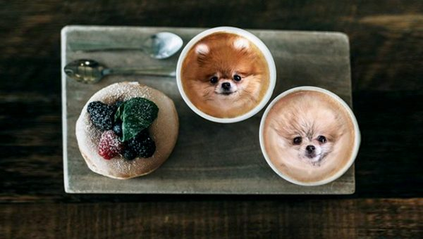 Popular Instagram Puts Dog Faces into Food Photos for Weirdly Wonderful Images