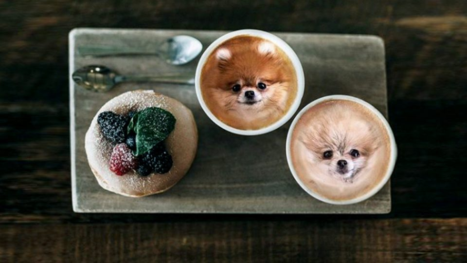 dogs in food instagram whimsical joy HERO