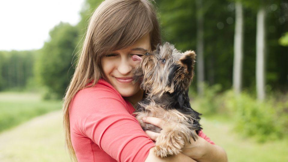 Yorkshire terrier people yorkie love
