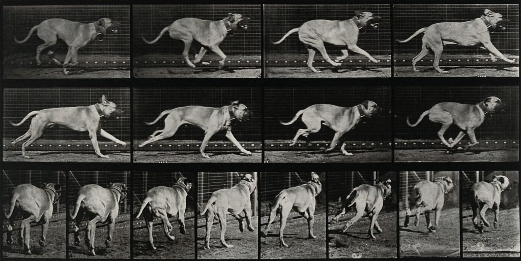 How Fast Can A Dog Run The Dog People By Rovercom