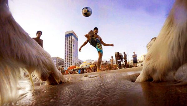 This Border Collie Is Famous in Brazil Thanks to His Soccer Skills [Video]