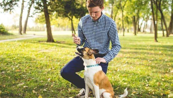 Essentiële tips voor jouw puberende hond