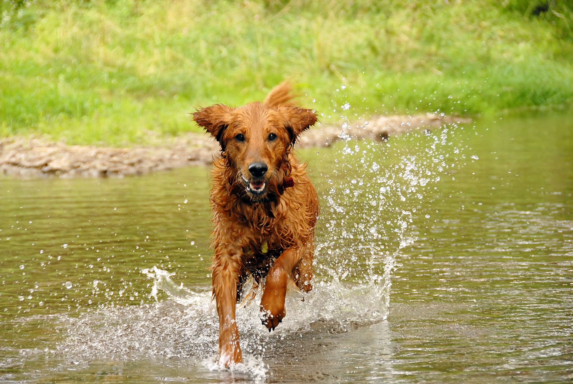 Hypothermia in Dogs | Signs and Treatment for Dog Hypothermia
