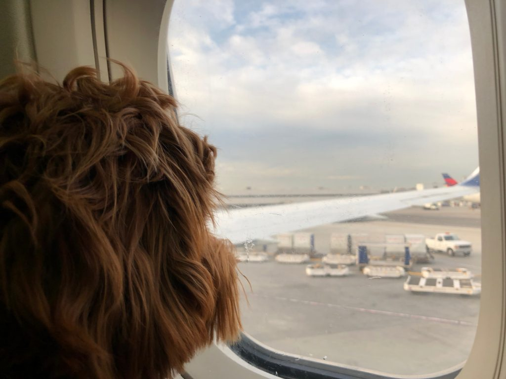 A dog stares out the window of a plane at the tarmac.