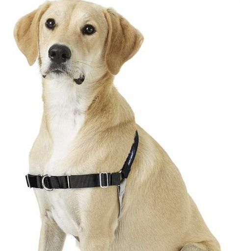 photo of Easy Walk dog harness