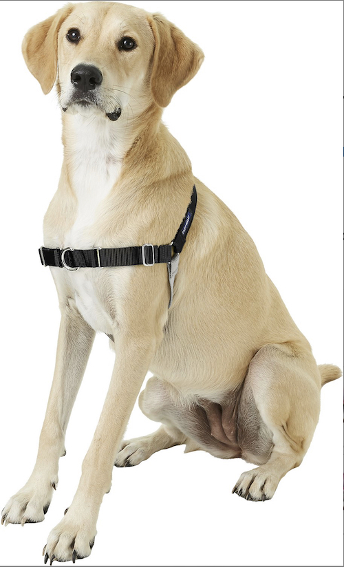 puppy wearing Easy Walk harness in black and gray