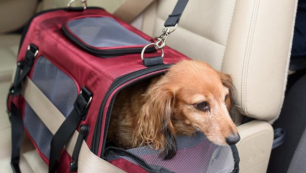 8 Best Dog Travel Crates for Stress-Free Travel