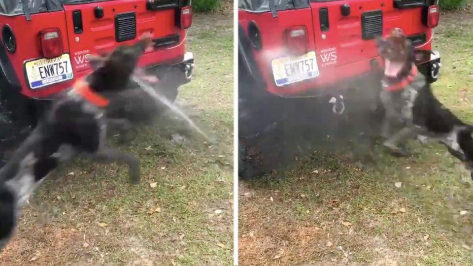 dog helps dad wash jeep HERO
