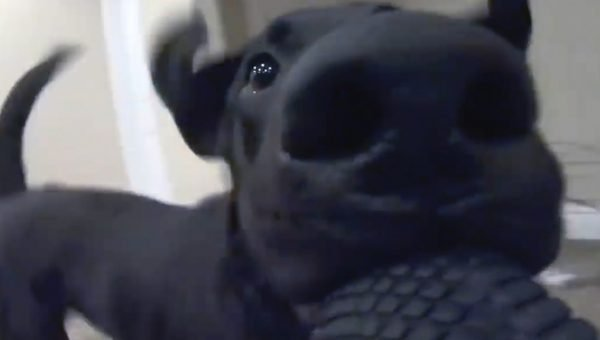 Dog Steals GoPro for Amazing Joyride Caught on Camera [Video]