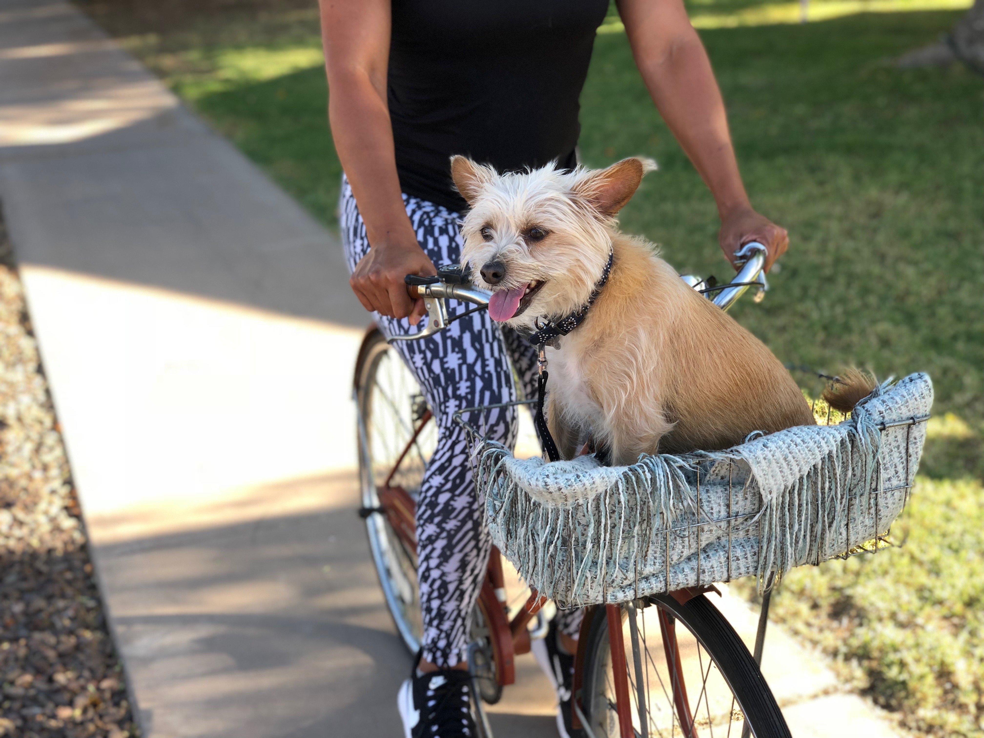 A small dog rides happily in a bike basket.