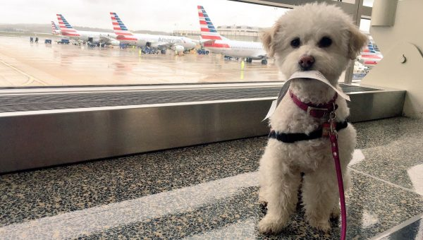 Flying With a Dog: Should You Take Your Dog on a Plane?