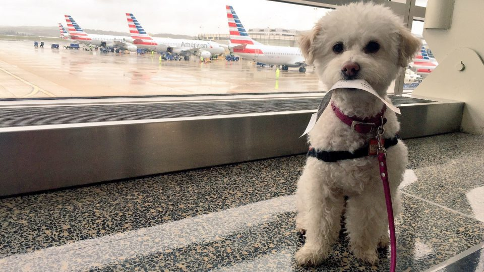 flying with a dog taking a dog on a plane should you do it
