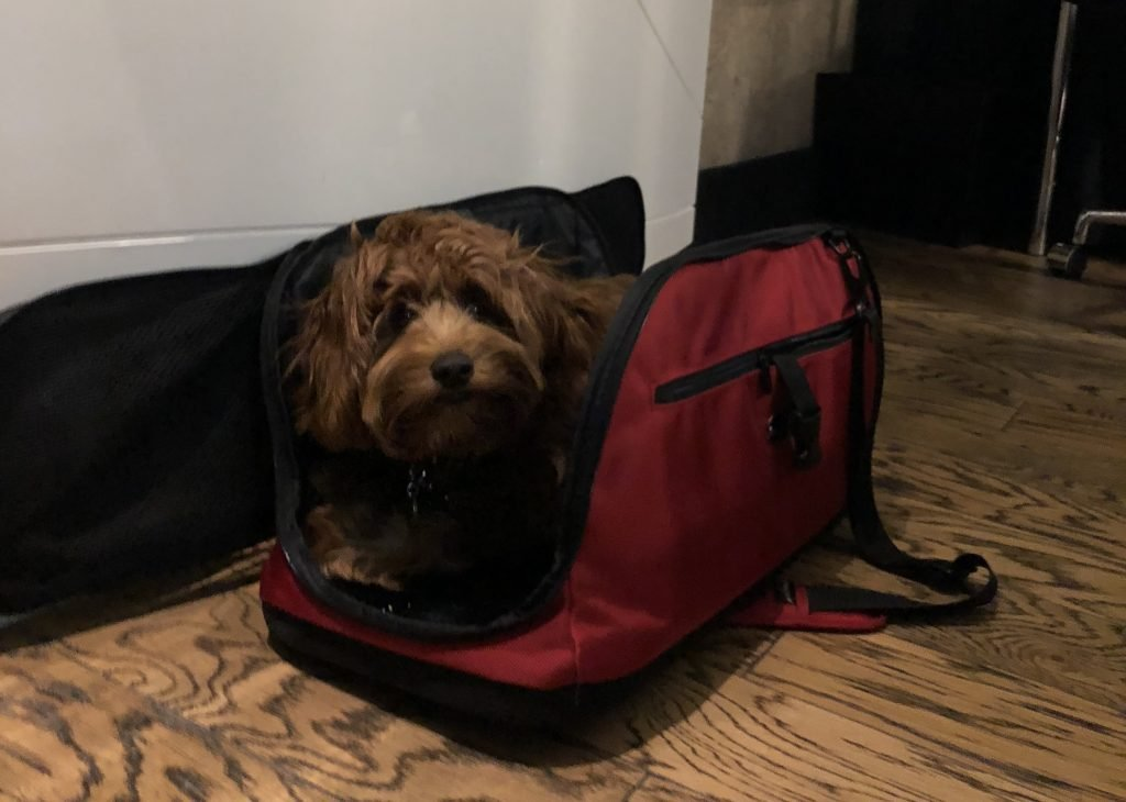 A dog rests in their carry bag on the floor.