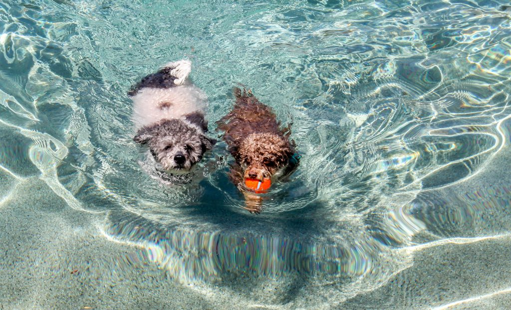 dogs swimming in pool tips