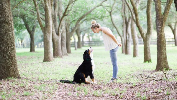A woman bends down, smiling, towards her large dog, training to not jump up.