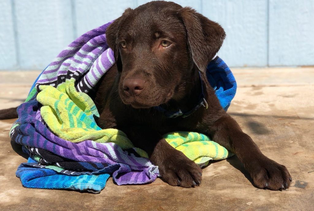 tips for dog pool safety