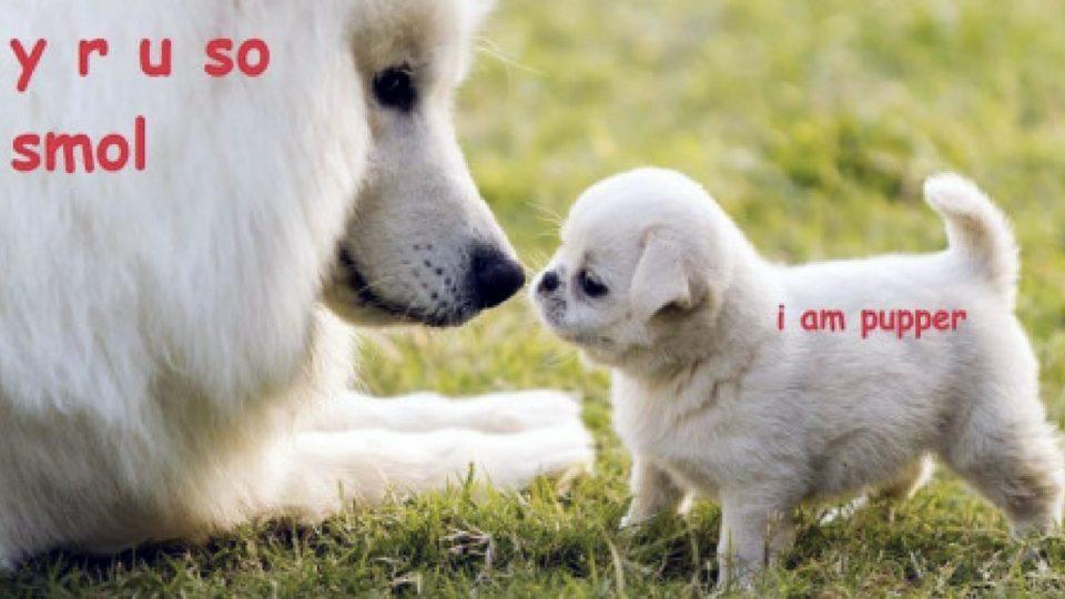 everything you need to know about doggo lingo HERO