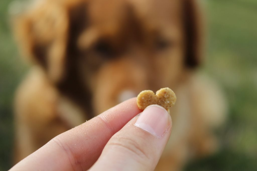 A heart-shaped treat is offered to an eager dog.