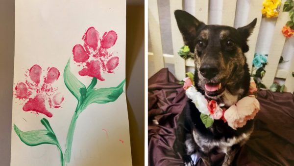 Dog Comes Home From Daycare With Heartwarming Mother's Day Card