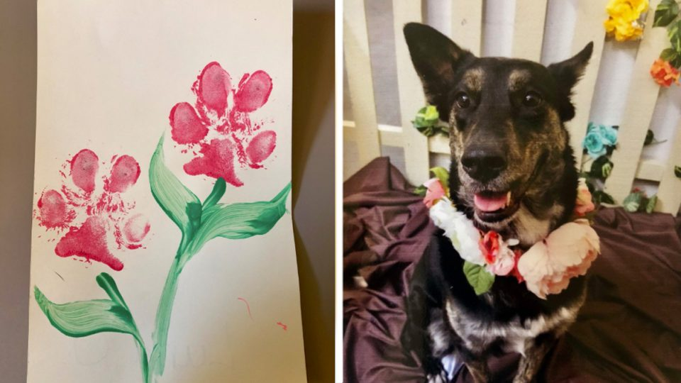 heartwarming homemade mothers day card from dog HERO